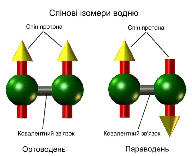 Схематичне зображення спінових ізомерів водню