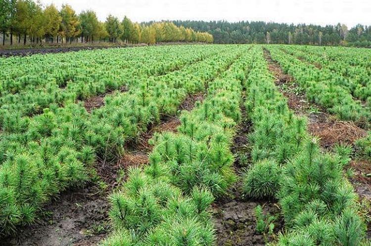 Висадка молодих лісів на Запоріжжі