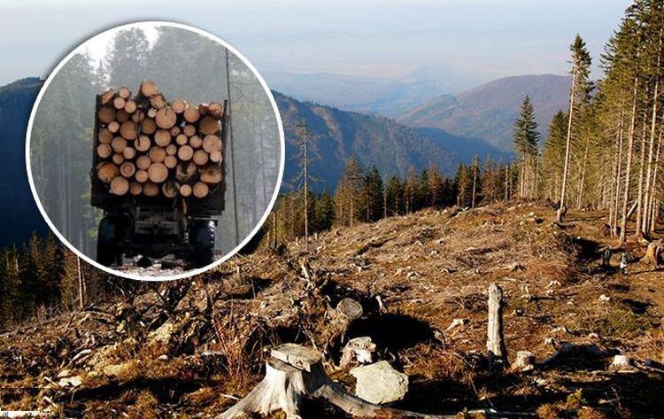 Знищення лісів на Закарпатті